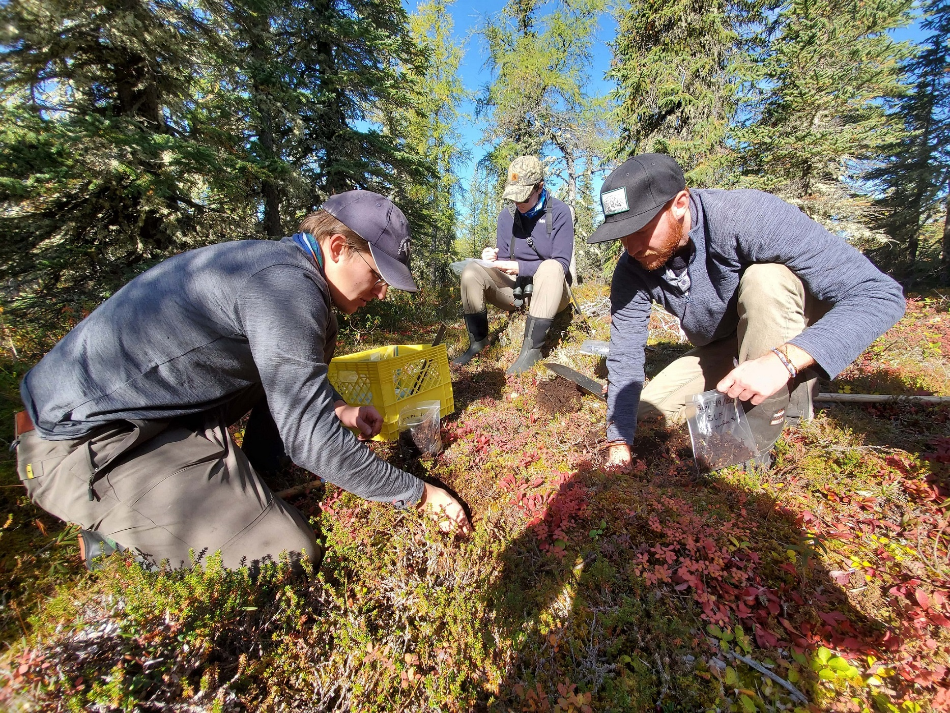 Collecting soil samples in the boreal forest.
